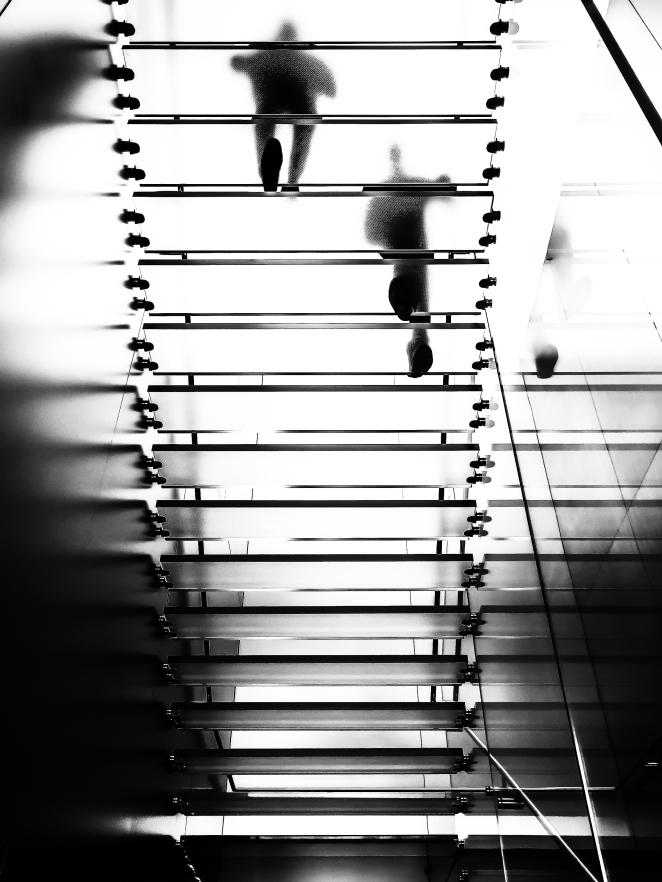 217/365 - Primates Ascending
